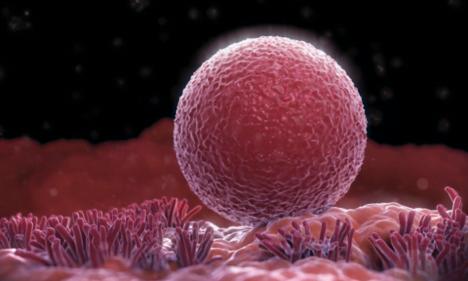 Egg and Sperm | MTHFR