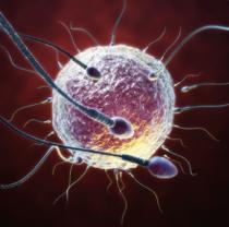 Human Fertilisation